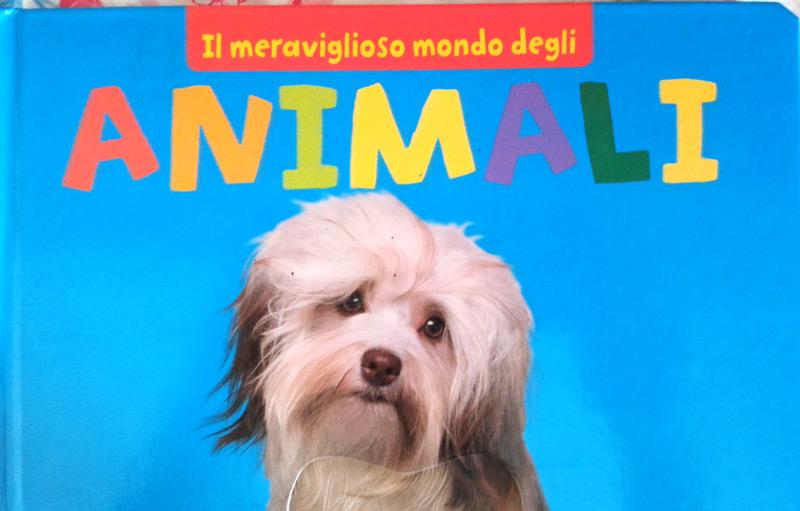 Il meraviglio mondo degli animali un libro per bambini - Animali terrestri per bambini ...